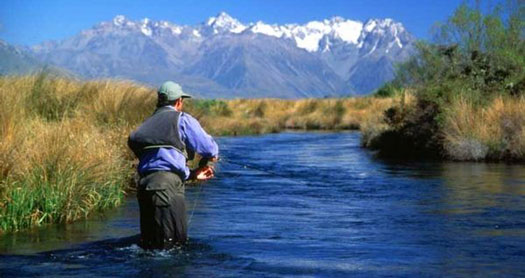 nz-fishing
